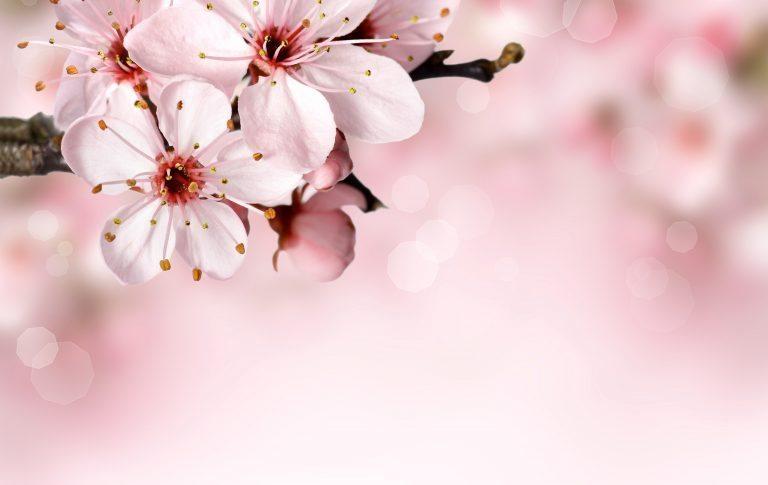 Gift idea mothers day flowers sans souci vienna