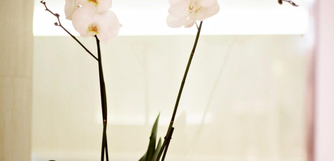 Spa & Beauty im Hotel Sans Souci Wien