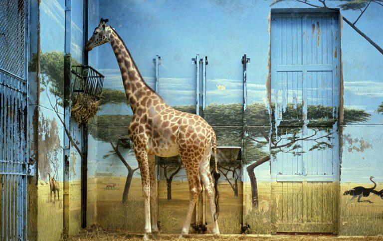 Candida Höfer, Zoologischer Garten Paris II, 1997, (c) Candida Höfer Bildrecht Wien 2017