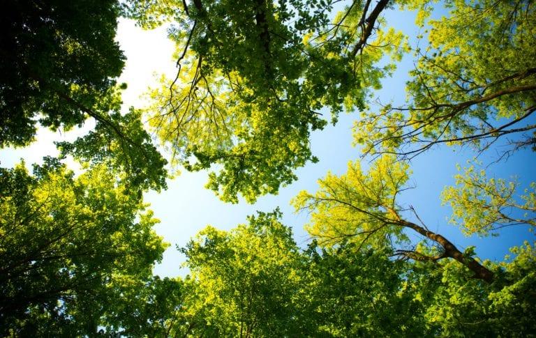 Bäume Sans Souci Wien Green Globe .pdf